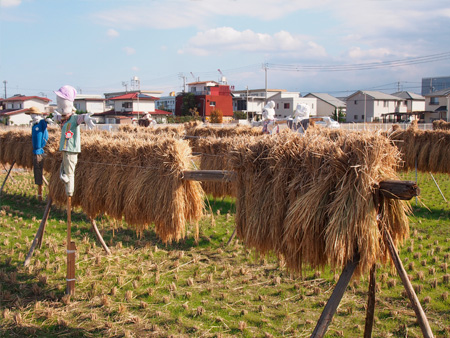 自然農法で育てるお米