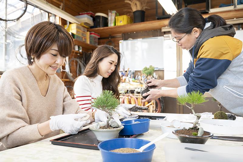 オリジナルの苔玉や盆栽づくりで、盆栽の良さがぐっと身近に。