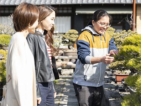 盆栽の歴史や育て方、手入れの仕方などについても説明してもらえます。