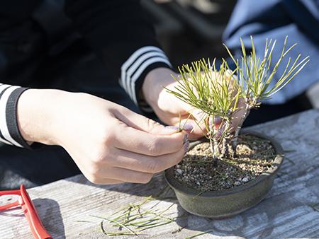 おみやげのミニ盆栽づくりは、盆栽の魅力を知るきっかけになりそう。